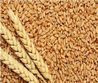وزير التموين: مصر تمتلك مخزونا استراتيجيا من القمح يكفي لنحو 4.7 أشهر