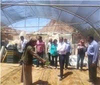 بالصور.. «حكيم سيناء» يشفي بالأعشاب الطبيعة للقضاء على الحصوة