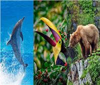 في يومها العالمي| الأمم المتحدة تنشر «فيديو» يوضح قيمة الحياة البرية