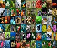 في سطور.. ما لا تعرفه عن اليوم العالمي للحياة البرية ؟