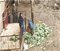 «أم محمد» تتحدى «التنين» ببيع الكرنب