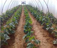 الزراعة: فحص428 رسالة تقاوي وبذور محاصيل خلال فبراير