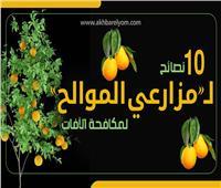 إنفوجراف| 10 نصائح لـ«مزارعي الموالح» لمكافحة الآفات.. تعرف عليها