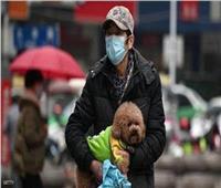 فيروس كورونا| نصائح للتعامل مع الحيوانات الألفية أثناء الحظر