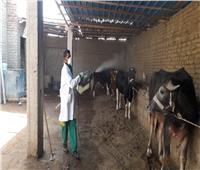 صور| «الزراعة»: تطهير 7538 منشأة حكومية ضد فيروس «كورونا»