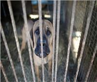 مدينة صينية تحظر تناول القطط والكلاب بسبب كورونا