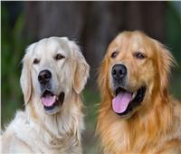 مفاجأة الكلاب والقطط لا تنقل فيروس «كورونا»