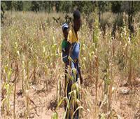 «الأغذية العالمي»: خطر المجاعة يتزايد في زيمبابوي