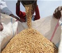 ما حقيقة عجز المخزون الاستراتيجي للقمح في مصر؟