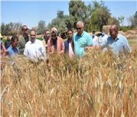 صوامع الوادي الجديد تبدأ استلام القمح من المزارعين