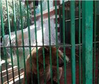 «الزراعة» استمرار غلق حديقة حيوان الجيزة خلال عيد الفطر