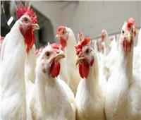 استقرار «أسعار الدواجن» بالأسواق اليوم بوقفة عيد الفطر المبارك