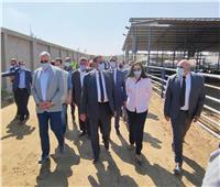 محافظة البحيرة: مزارع الإنتاج الحيواني تدار وفقا لأحدث التكنولوجيا العالمية