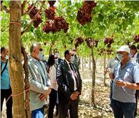 القصير: توجيهات الرئيس السيسي الاهتمام باستصلاح الأراضي لإنتاج المحاصيل الإستراتيجية