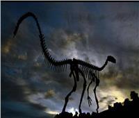 دراسة حديثة تنفي نظريات انقراض الديناصورات القديمة
