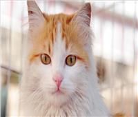 بسبب قطة.. فرنسي مهدد بالسجن لعامين