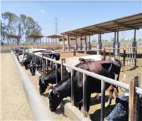 6 أعوام على حكم السيسي.. مشاريع عملاقة وفرت «البروتين الحيواني» للمصريين