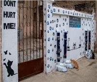 مبادرة إنسانية لإطعام «قطط وكلاب الشوارع».. فيديو