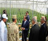 6 أعوام على حكم الرئيس.. مشروع الصوب الزراعية يدفع قطار الصادرات للعالمية