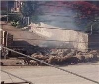 امسك مخالفة  حريق القمامة بطوخ في القليوبية.. والأهالي: ارحمونا هنموت من الدخان