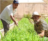 الزراعة: مركز بحوث الصحراء ينجح في إنتاج شتلات «البيانكم» بمطروح