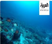 فيديو| دراسة بيئية تكشف أسباب انقراض الأسماك بالبحار