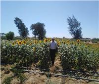 الزراعة تتابع دور محطة رأس سدر لبحوث الصحراء في خدمة أهالي سيناء