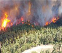 اندلاع حرائق الغابات في تركيا.. وإغلاق مضيق جاناكالي أمام حركة الملاحة