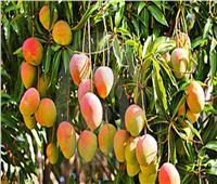 فيديو| استشاري تغذية يكشف نوعًا من الفاكهة يحارب «كورونا»