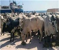 الحكومة تنفي نقل تبعية المحاجر البيطرية والمجازر للهيئة القومية لسلامة الغذاء