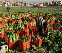 الزراعة: ارتفاع صادرات مصر لأكثر من 3.6 مليون طن