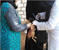 تحصين 173 ألف طائر ضد أنفلونزا الطيور في الشرقية