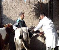«الخدمات البيطرية»: تحصين 1.7 مليون رأس ضد الحمى القلاعية والوادي المتصدع