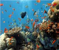 60 % من الأسماك مهددة بالانقراض لهذا السبب