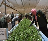 إنتاج 50 ألف شتلة زيتون بمركز التنمية المستدامة لموارد مطروح دعماً للمزارعين
