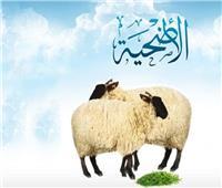قبل عيد الأضحى| 10 نصائح من الإفتاء للمضحين في ظل كورونا