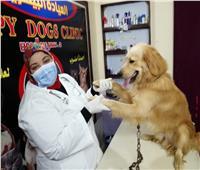 هل تصاب الكلاب بـ«الزهايمر»؟ طبيبة بيطرية تجيب