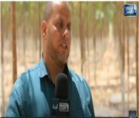 بالفيديو | خبير زراعي:  إنتاج أول شتلات لأشجار الباولونيا بإشراف جامعة عين شمس