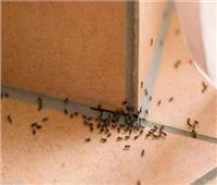 خبيرة طاقة تكشف علاقة النمل بالحسد وطرق الوقاية