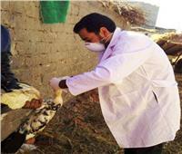 تحصين 325 ألف طائر ضد انفلونزا الطيور بالشرقية