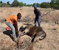 الولايات المتحدة تتبرع بـ 60 مليون دولار لتقديم مساعدات خلال الجفاف في زيمبابوي