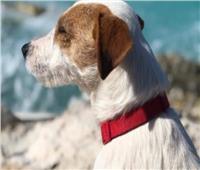 «عودة الحيوان الضال».. إعلانات ممولة ومكافآت مادية للعثور على الكلاب المفقودة