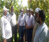 صور| «الزراعة» تتفقد ٥ مواقع إرشادية وانتاجية بمحافظة كفر الشيخ
