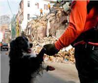 كلب يشم رائحة الإنسان فقط.. ويصل للمفقودين في انفجار بيروت