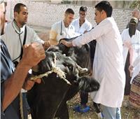 بدء تنفيذ الحملة القومية لتحصين الماشية ضد الحمى القلاعية والوادي المتصدعبأسيوط
