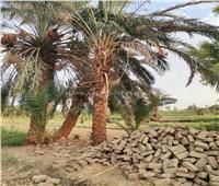 حبس طالب قتل نجل عمه بسبب خلافات على «سباطة بلح» بقنا