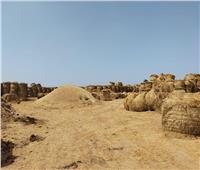 الزراعة: جمع وتدوير أكثر من 787 ألف طن قش الأرز في 6 محافظات