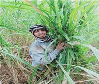 صور| الصعيدي الجدع.. ناصر عمل في زراعات القصب والتحق بكلية الطب