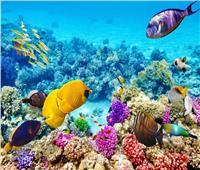 فيديو| المرشدين السياحيين: مصر أكثر دول العالم حفاظا على المحميات الطبيعية
