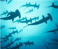 محاولة تهريب 11 طنا من أسماك القرش «المحمية دوليا».. والشرطة تضبطها في المخازن